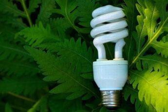 produse ecologice